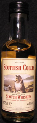 Scottish Collie